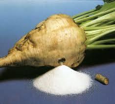 Голландская сахарная свекла страдает от неизвестной болезни