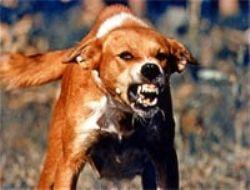 Бешеный пес напал на жителей Баткенской области