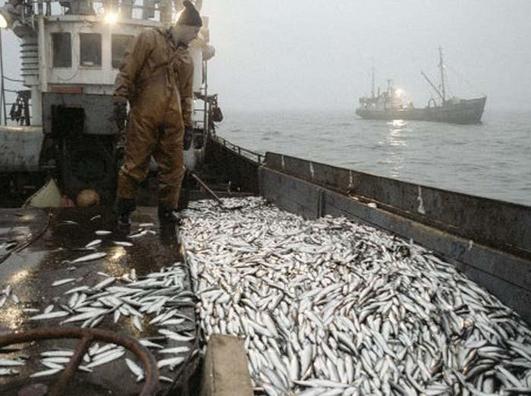 сколько рыбы вытаскивали рыбаки за одну тонну в хорошие времена