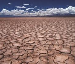 ВБ: Цены на мировом продовольственном рынке растут из-за засухи