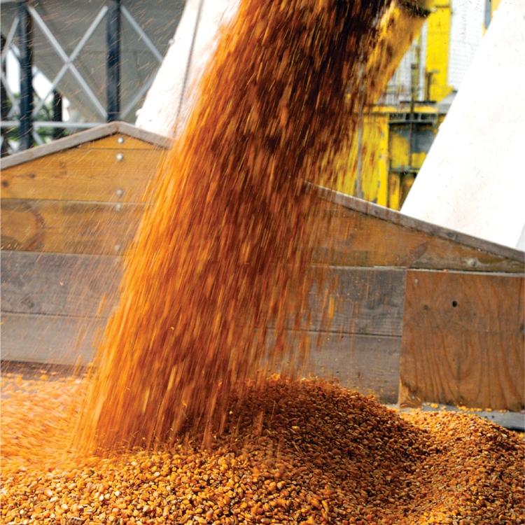 Верховная Рада отменила разрешения на вывоз зерна за пределы области