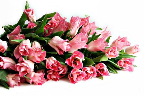 Документы для торговли цветами