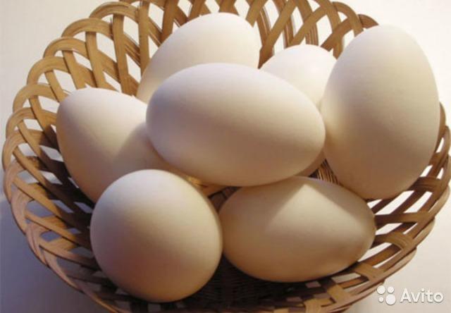 холестерин печень куриная