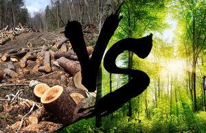 f7cf058-forest0.jpg